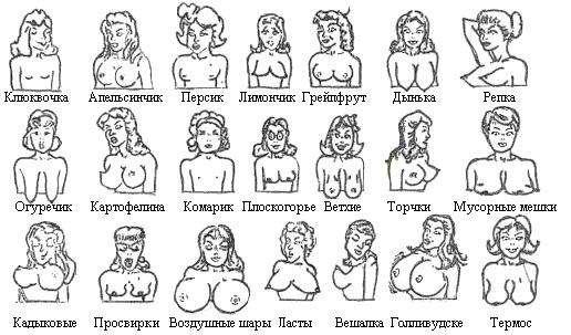 разновидность женских сисек фото